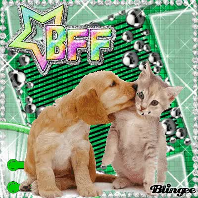 Watch this best friend GIF on Gfycat. Discover more best friend, bff GIFs on Gfycat