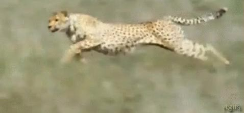 Watch and share Hunting GIFs on Gfycat