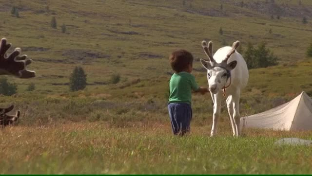 Watch and share Mongolian Nomadic Reindeer Tribe GIFs by redditor5standingby on Gfycat