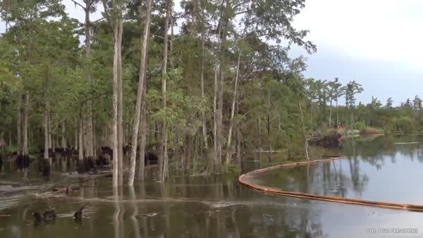 TheDepthsBelow, woahdude, Underwater sinkhole swallowing trees. (reddit) GIFs