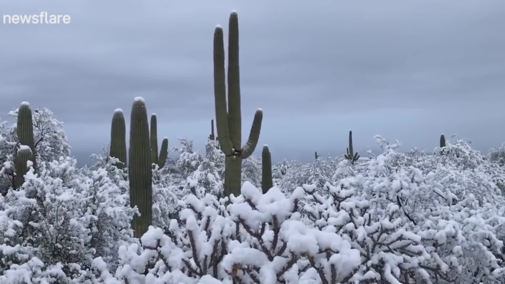 Snowing in the Desert GIFs