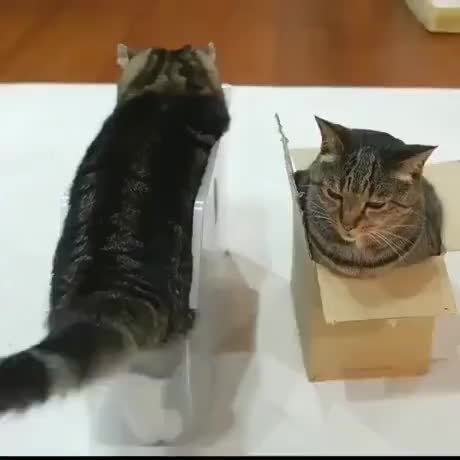 Catto doing catto thing - gif