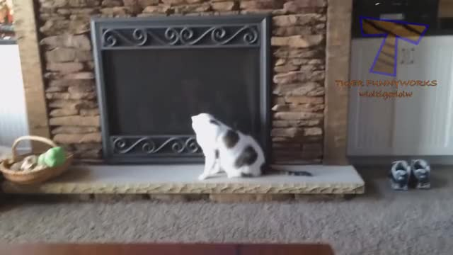 Watch and share Kitten GIFs and Cats GIFs on Gfycat