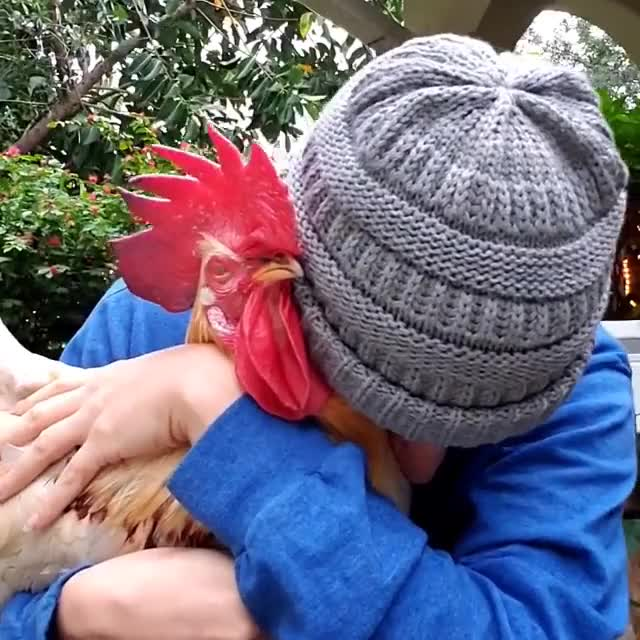 Watch and share Chicken Hugs GIFs and Bird Hug GIFs by lnfinity on Gfycat