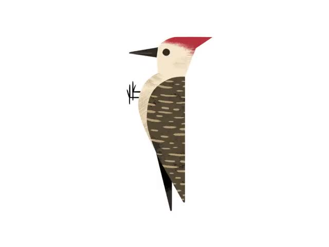 Watch and share Animated Woodpecker, Andrew Kolb GIFs on Gfycat