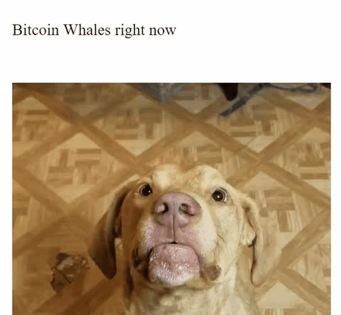 Bitcoin whales right now GIFs