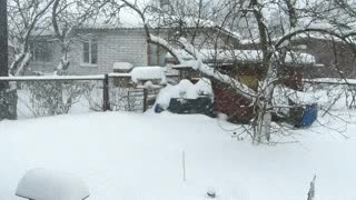 Watch and share Snow GIFs by sergey1959 on Gfycat