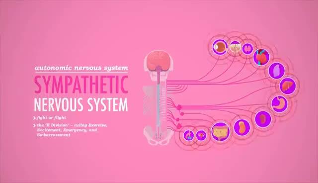 Watch and share Autonomic Nervous System: Crash Course A&P #13 GIFs on Gfycat