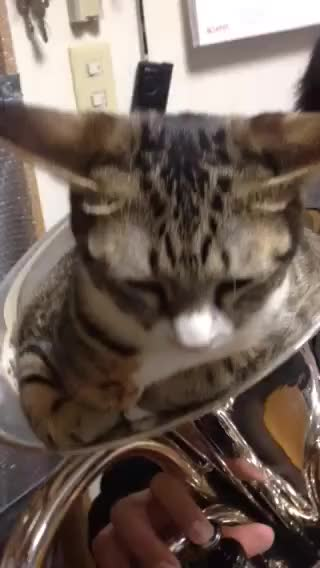 Watch and share Cat Mute For Euphonium GIFs by likkaon on Gfycat