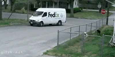 Watch HETN Dogs Watch FedEx GIF on Gfycat. Discover more related GIFs on Gfycat