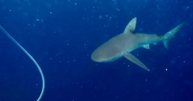 Watch and share Stabby Sharky GIFs by ruderalis on Gfycat