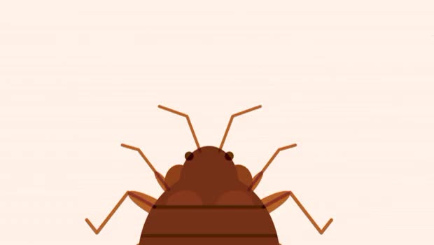 Watch and share Bed Bugs Are Okay With Bed Bug Bed Bugs Are Okay With Bed Bug Okay,bugs,bed,are,with,bug,bed Bugs (reddit) GIFs by Danno on Gfycat