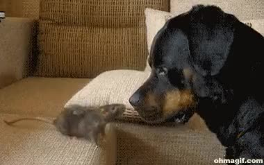 Watch dog GIF on Gfycat. Discover more AnimalsBeingJerks GIFs on Gfycat