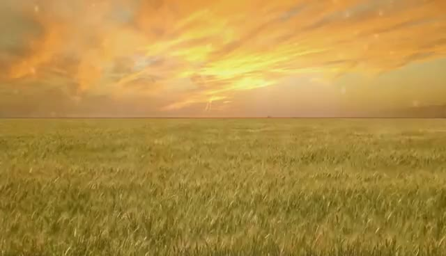 Watch and share Wheat Field - Free Creative Commons Particle Motion Background Video 1080p HD GIFs on Gfycat