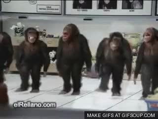 Watch chimpanzee GIF on Gfycat. Discover more related GIFs on Gfycat
