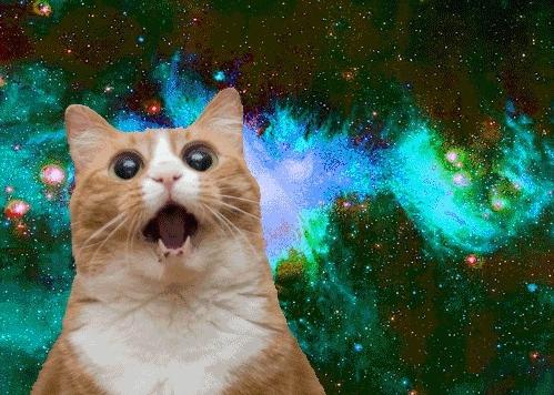 cat, kitten, kitty, meow,  GIFs