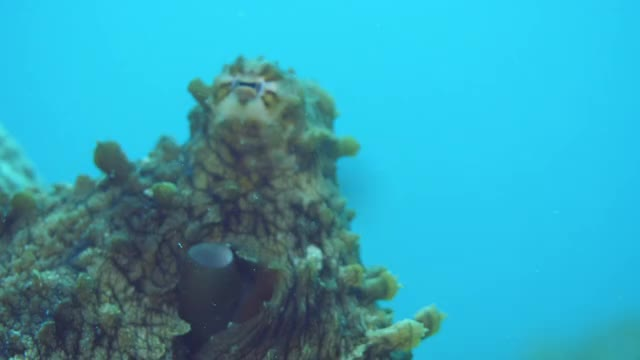 Watch and share Octopus GIFs and Komodo GIFs by kay-dubya on Gfycat