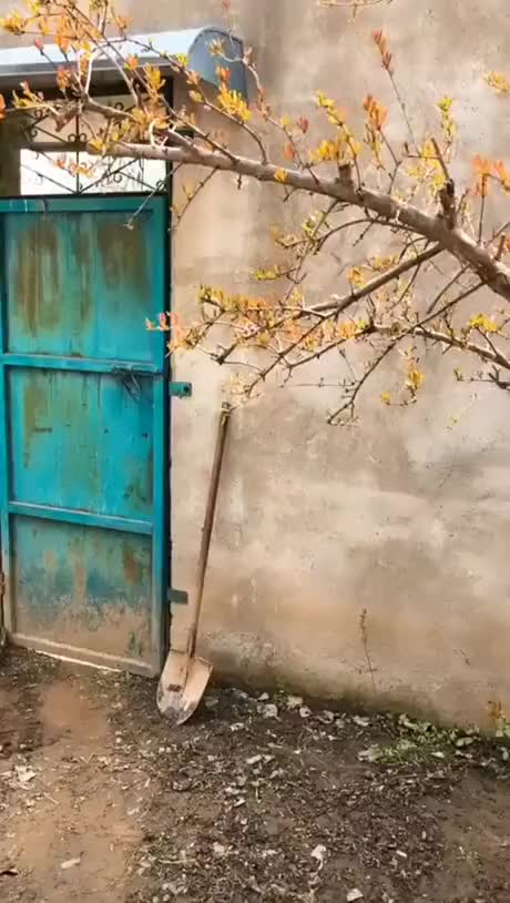 Watch and share What A Beautiful Sight To Open A Door To... GIFs by Gif-vif.com on Gfycat