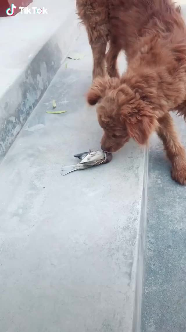 Watch and share Smart Bird GIFs by leathernegotiation on Gfycat