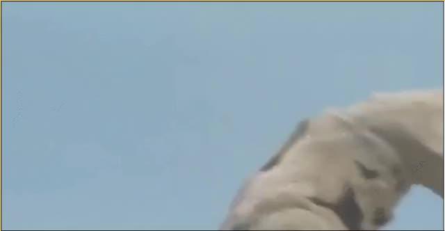 Respect Rei's Gomora: Ultraman (reddit) GIF | Find, Make