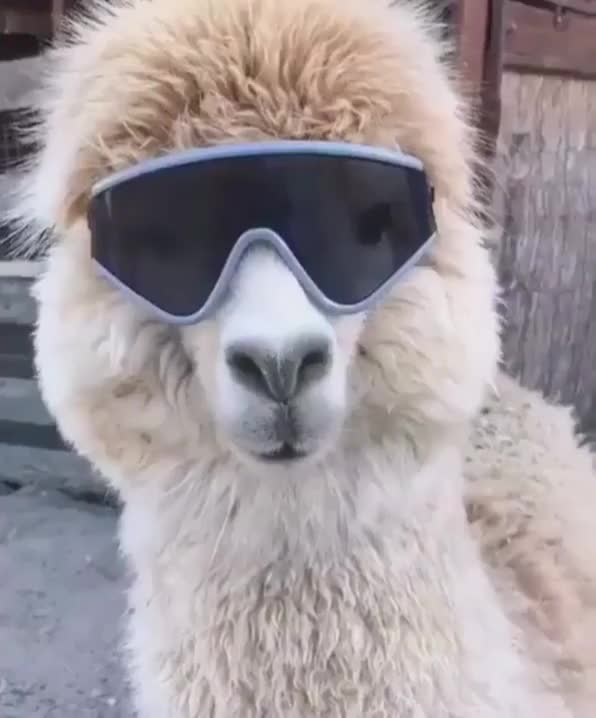 Watch and share Hilarious GIFs and Animal GIFs by JustViral.Net on Gfycat