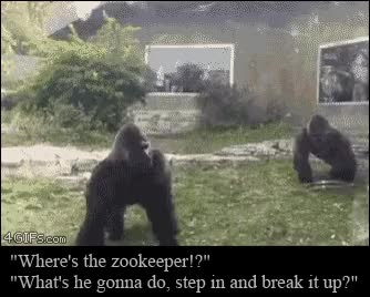 Watch Zoo gorillas fight GIF on Gfycat. Discover more related GIFs on Gfycat