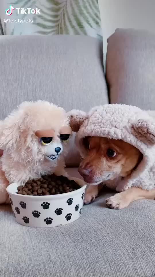 Dogo not sharing Food