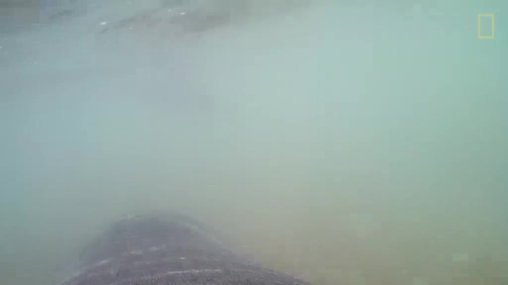 POV footage of a Leopard Seal hunting Fur Seal pups GIFs