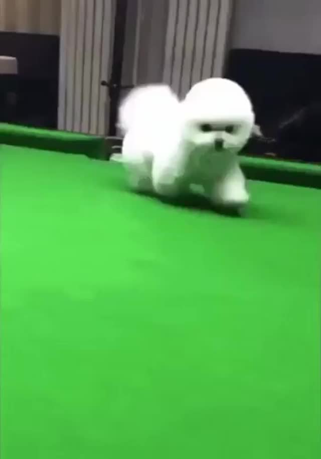 "Watch and share That Dog Better Be Named ""cueball"" Ffs! GIFs by mohdshaifulrizalrich on Gfycat"