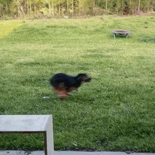 Watch and share Using Every Inch For Her Zoomies GIFs on Gfycat