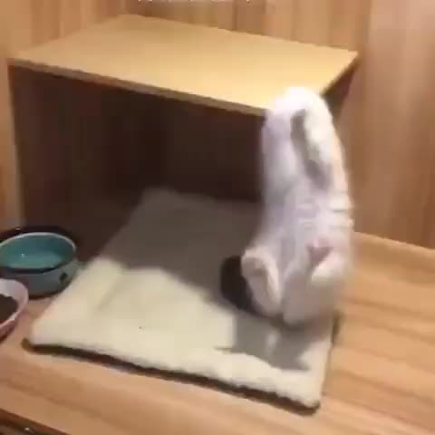 pleasant cats 🇹🇷, pleasantcats, getting that workout in GIFs