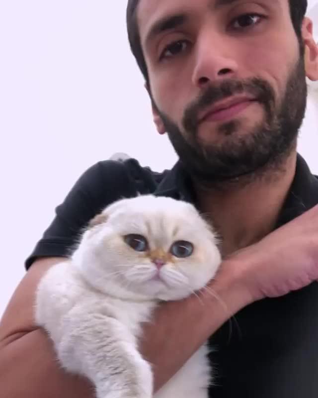 Watch and share Catstocker GIFs and Catmyboss GIFs by vani  on Gfycat