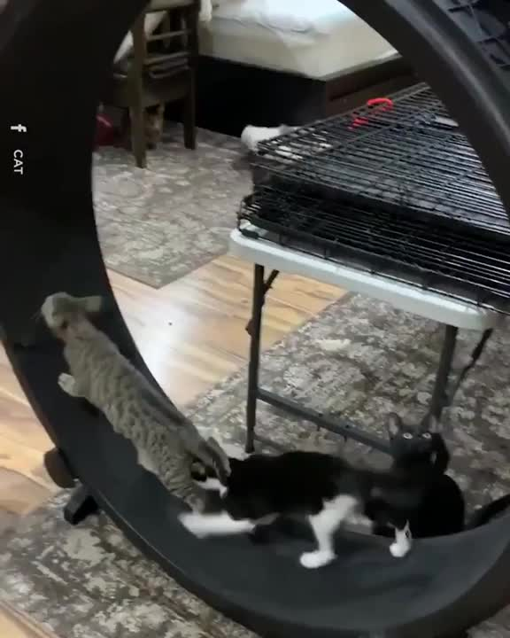 Watch and share Cats GIFs by notmyproblem on Gfycat