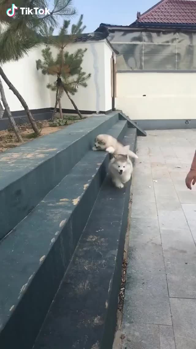 Watch and share Fluffy! GIFs by Funny gifs on Gfycat
