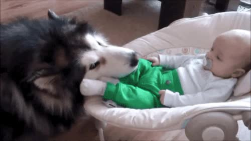 Watch bedtime puppy GIF on Gfycat. Discover more related GIFs on Gfycat