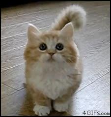 Watch and share Sad Kitten GIFs on Gfycat