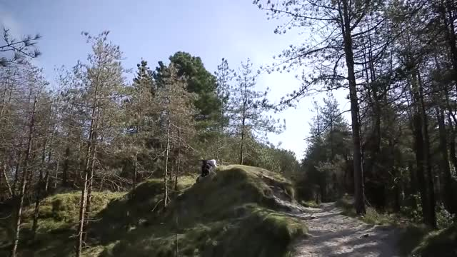 Watch irish GIF on Gfycat. Discover more Entertainment, Forest (Type Of Ecosystem), Newgrounds, OneyNG, Paddy, Republic Of Ireland (Country), Wexford, Yanni Misirlis GIFs on Gfycat