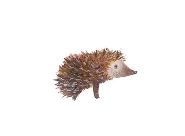 Watch and share Hedgehog Game Jež GIFs on Gfycat