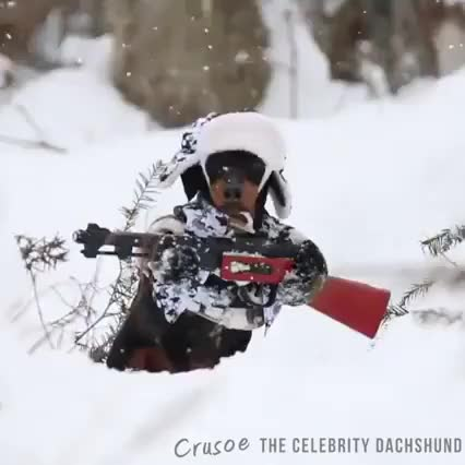 Watch and share Successful Hunting Trip GIFs by DUde on Gfycat