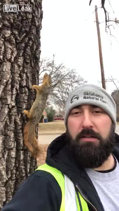 Watch and share So Cold Squirrel Is Frozen To A Tree GIFs on Gfycat