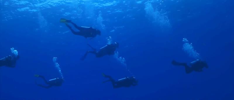 scuba divers GIFs
