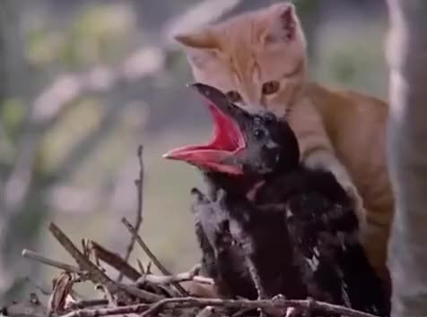 Watch this cat GIF by The GIF Forge (@leahstark) on Gfycat. Discover more bird, cat, cats are jerks, cats being jerks, hit, milo and otis, smack, whack GIFs on Gfycat