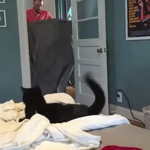 Watch and share Catoftheday GIFs and Catstagram GIFs on Gfycat