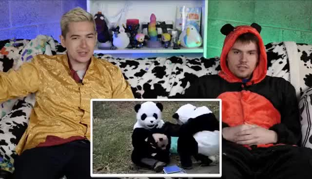 Watch and share CHINESE PANDA IN CHINA TOWN • Foreign Import GIFs on Gfycat