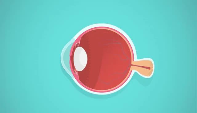Vision: Crash Course A&P #18 GIFs