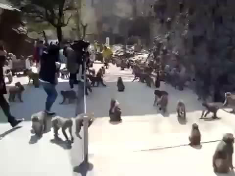 Watch and share Monkeys!!! GIFs on Gfycat