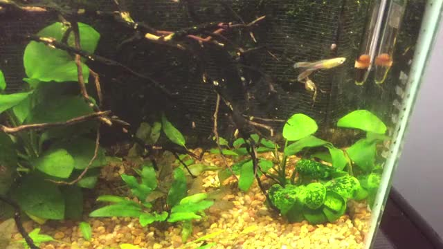 Watch and share Aquariums GIFs by karadactyl on Gfycat
