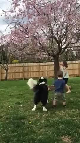 Watch and share Dog Accidentally Kicks Toddler - 987599 GIFs by Slim Jones on Gfycat