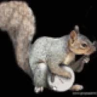 banjo squirrel