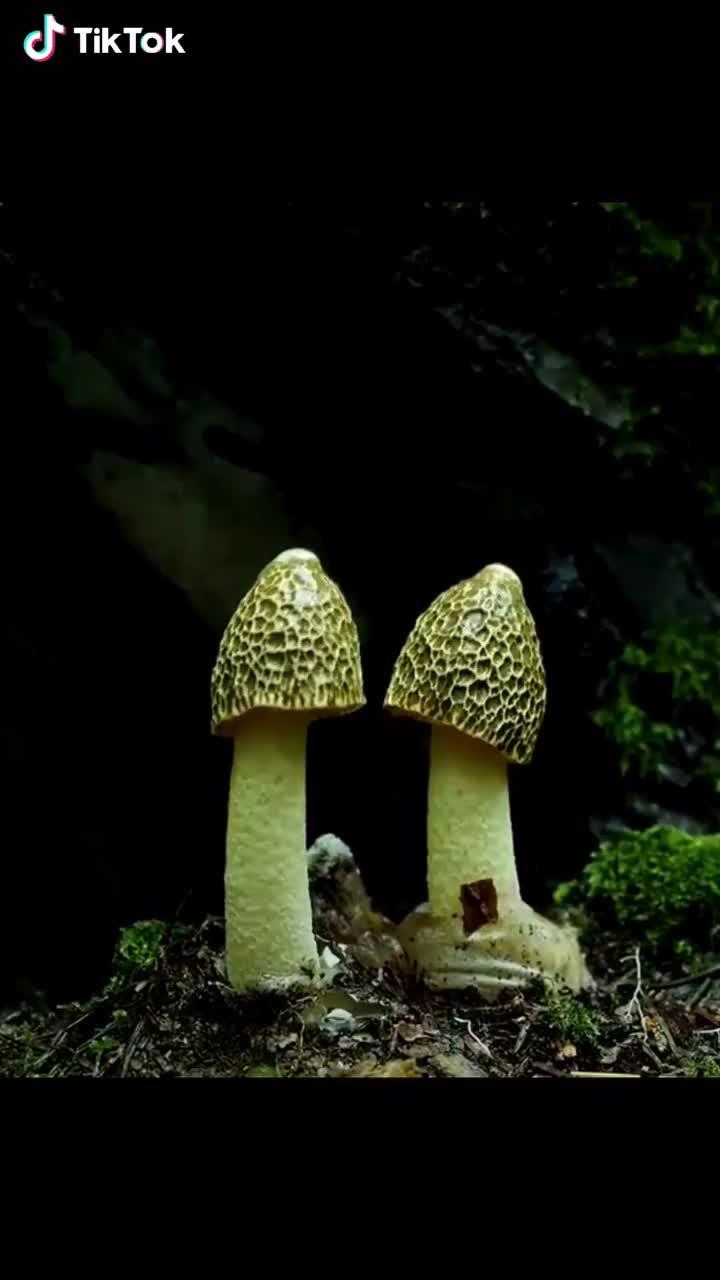 How mushrooms grow GIFs